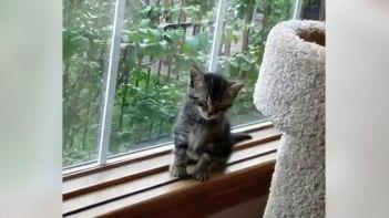 遊び疲れた子ネコさんが窓辺でウトウト・・・危ないよ〜