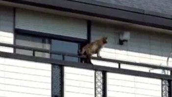 トテテテ・・・バルコニーを何だか不思議な歩き方で通っていくネコさん