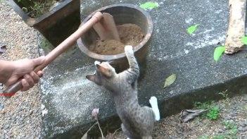 「鉢植えの準備?ボクも手伝うよ〜」やんちゃなネコさんが鉢植えの準備を手伝ってくれました(肥料入り)