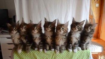 みんな揃って右左!子ネコさんたちの集中力に可愛さ爆発!