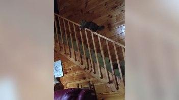 それ滑ったの?-ネコさんの意外な階段の降り方!