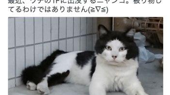 まるでかぶり物をしている様なネコさんが発見される・・・よく見ると何かに似てない?