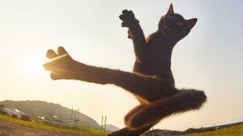 ネコ界激震!?-最強流派「黒猫拳」をマスターしたネコさん現る!躍動感が半端ない!