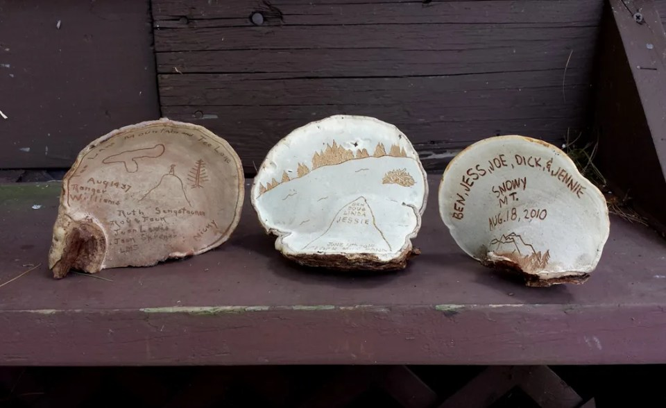 Three etched artist's conks from our Adirondack camp, dated 1937, 2014, and 2010.
