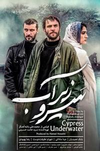 Cypress Under Water (2018)