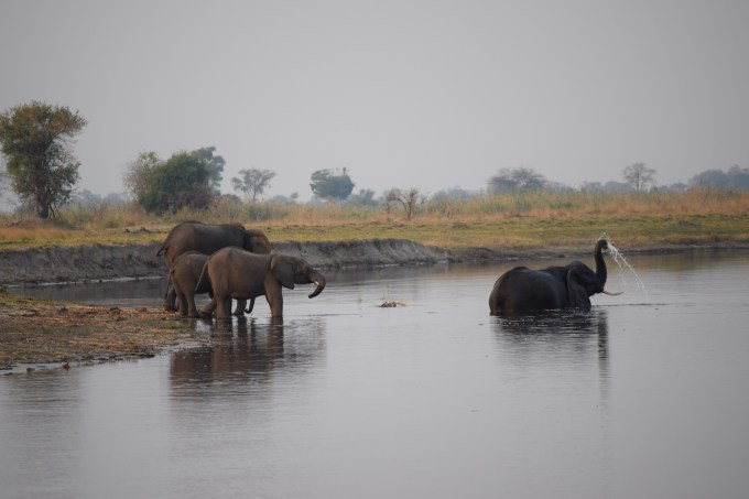 elefant-river