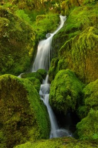 Waterfall in the Oregon Cascades