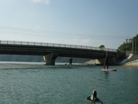 橋をくぐればマングローブ