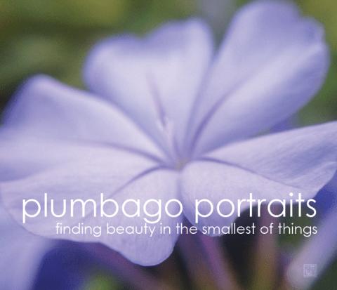 plumbago-portraits