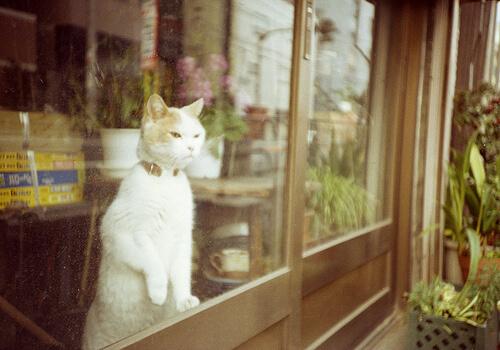 窓にいる猫