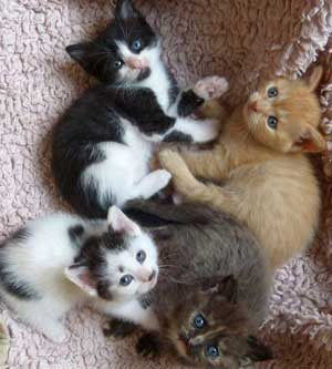 Kinderkatzen_1