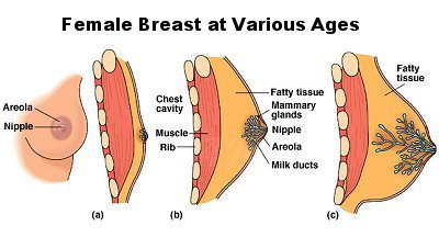 inducing male breast growth