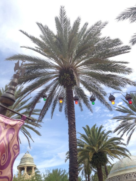 We wanted to make sure B saw the palm trees - this was outside the magic show.