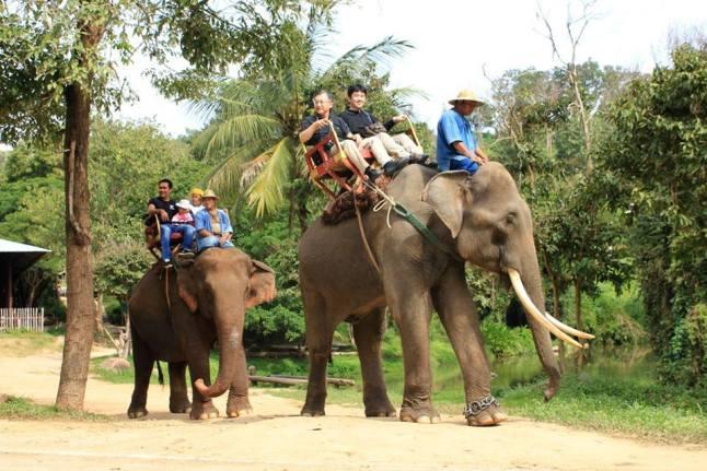 นั่งช้างที่ศูนย์อนุรักษ์ช้างไทย