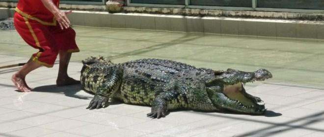 зооопарк на Пхукете - крокодили