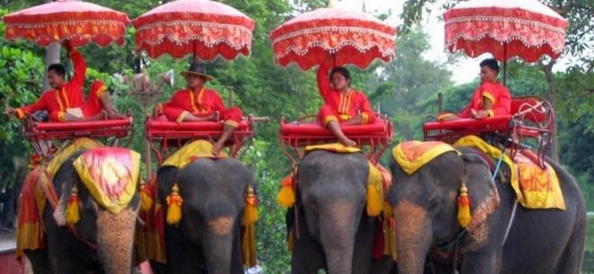 зоопарк на Пхукете - слони1
