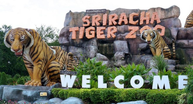 Тигровый зоопарк в Паттайе
