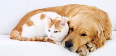 Cuidados durante o cio de cadelas e gatas (Castração)