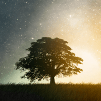 5 Insights to Gain from Trees with Meditation