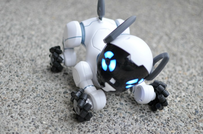 chip-the-robot-dog