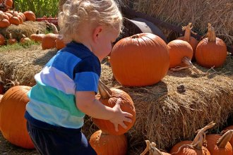 The Fall Festival at Barton Hill Farms
