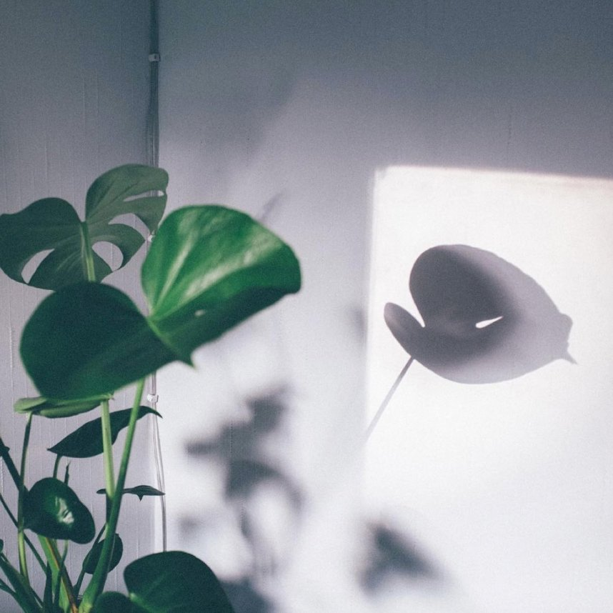scandinavian_feeling_hygge_shadow_plant