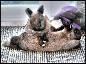 Tax Bunny Special 2016