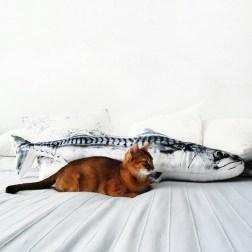 Грация, любовь и 4 котенка: абиссины Ирины Васильевой