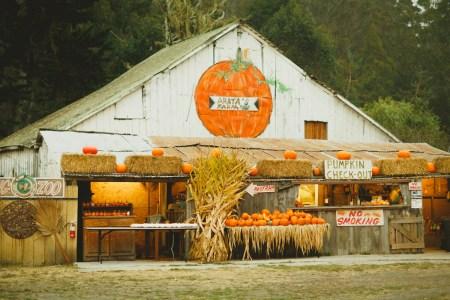 Оранжевая осень: поездка на тыквенную ферму в Калифорнии