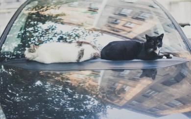 Sami po sebe peterburgskie koty (2)