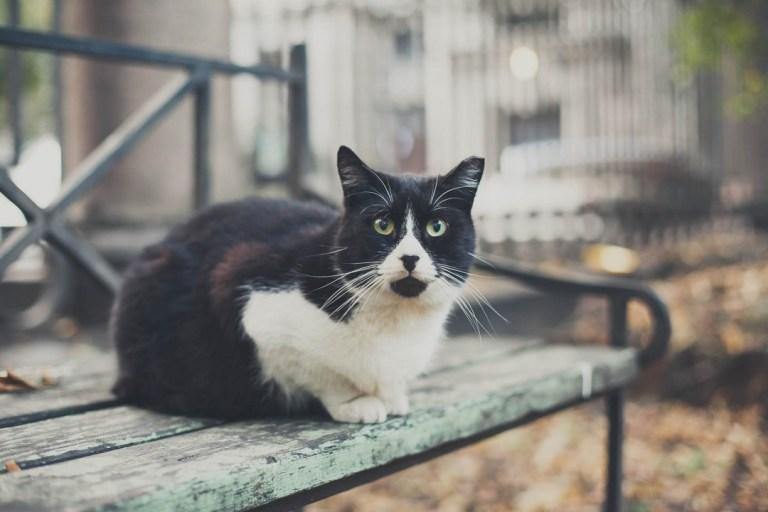 Сами по себе: петербургские коты