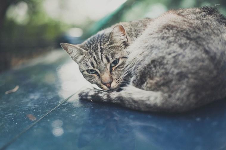 Sami po sebe peterburgskie koty (8)
