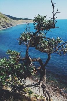 Среди гор и морей: путешествие по Кавказу