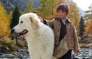Подборка фильмов про животных: часть 2