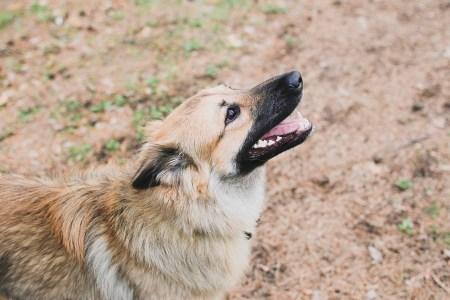 Любитель сладостей: пес Волчок