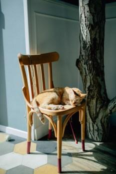 Romeow Cat Bistrot-1 (25)