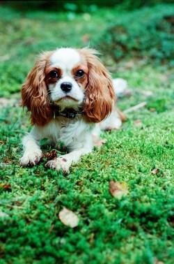 Королевская особа: собака Джинни