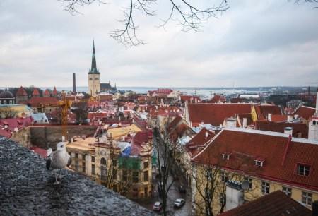 Путешествие в Средневековье: прогулки по Таллину