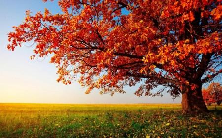 Кино по четвергам: Осенняя подборка уютных фильмов