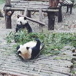 Китай — неизвестная сторона Поднебесной