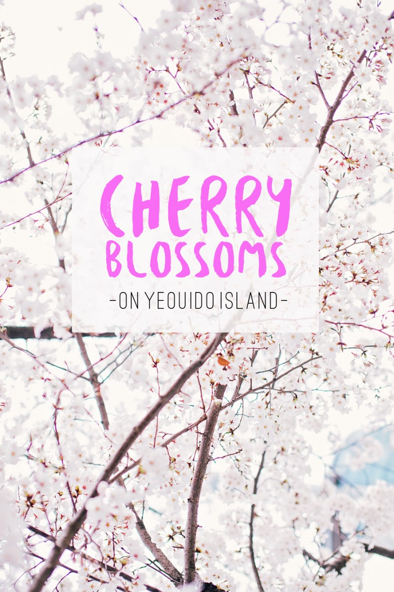 Cherry blossoms in Yeouido Park