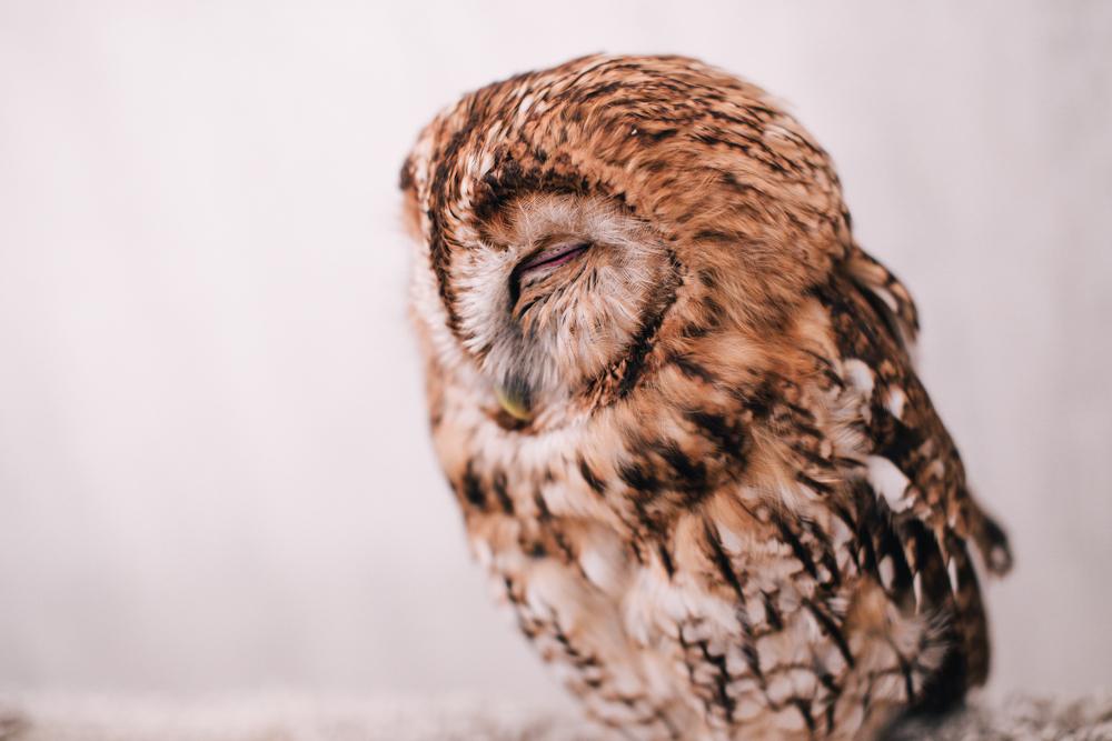 owls-151119-18