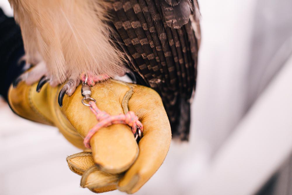 owls-151119-22