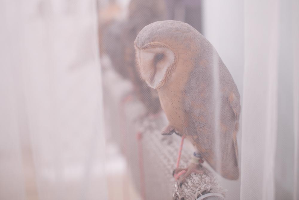 owls-151119-29