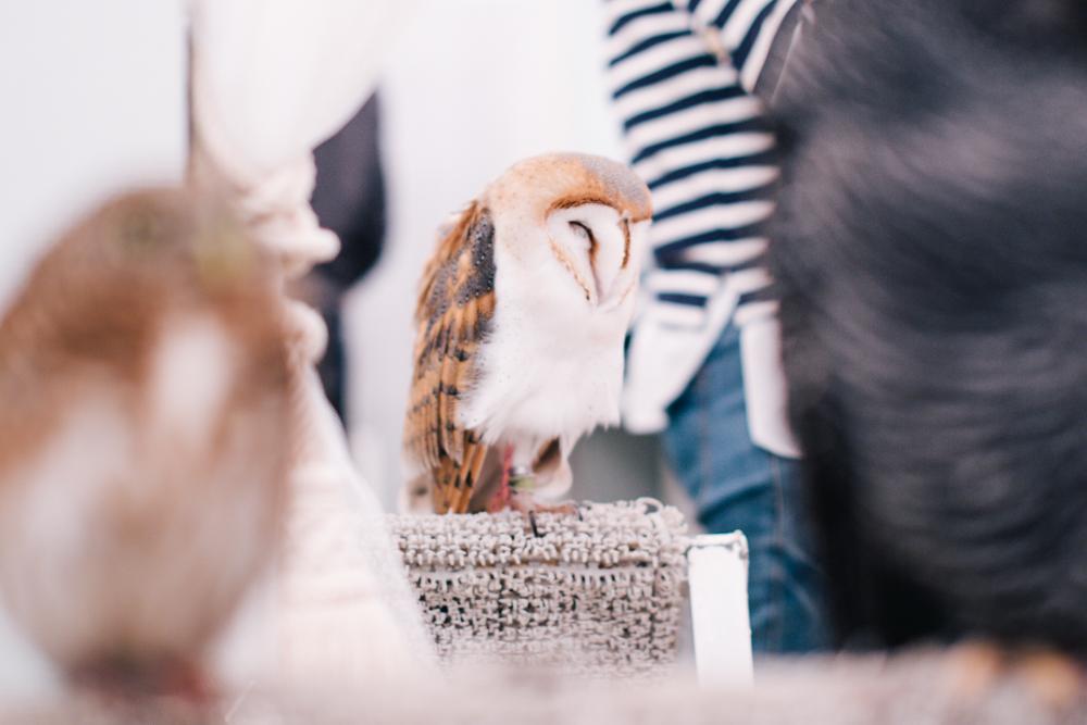 owls-151119-7