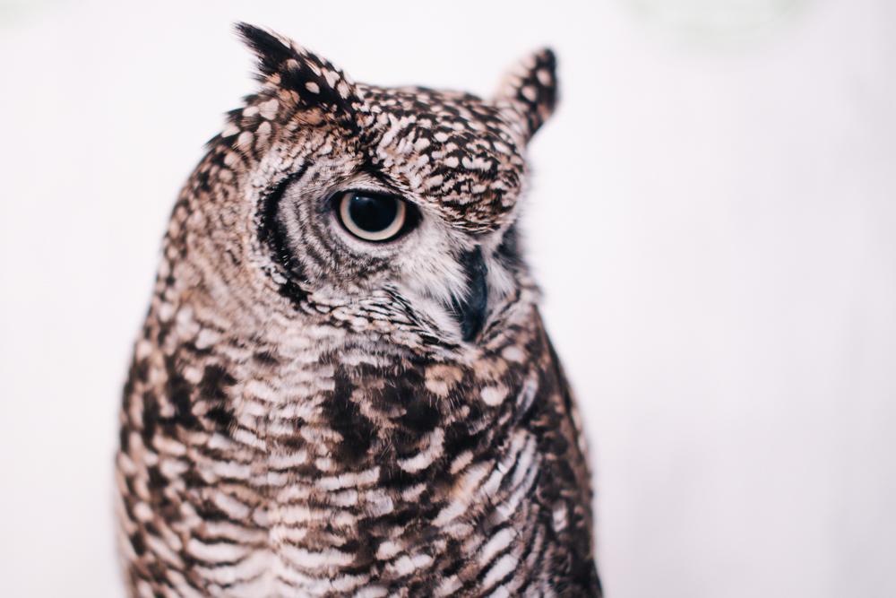 owls-151119-8