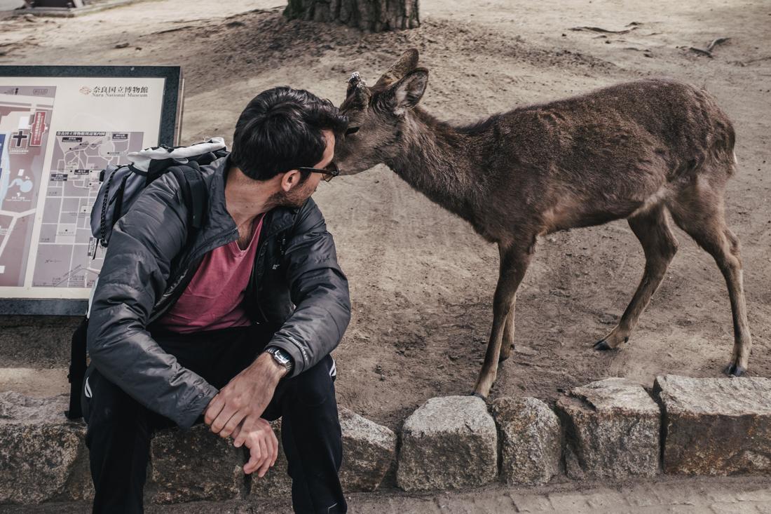 Nara-Park-160306-34