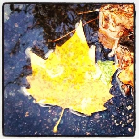 Discovering nature leaf