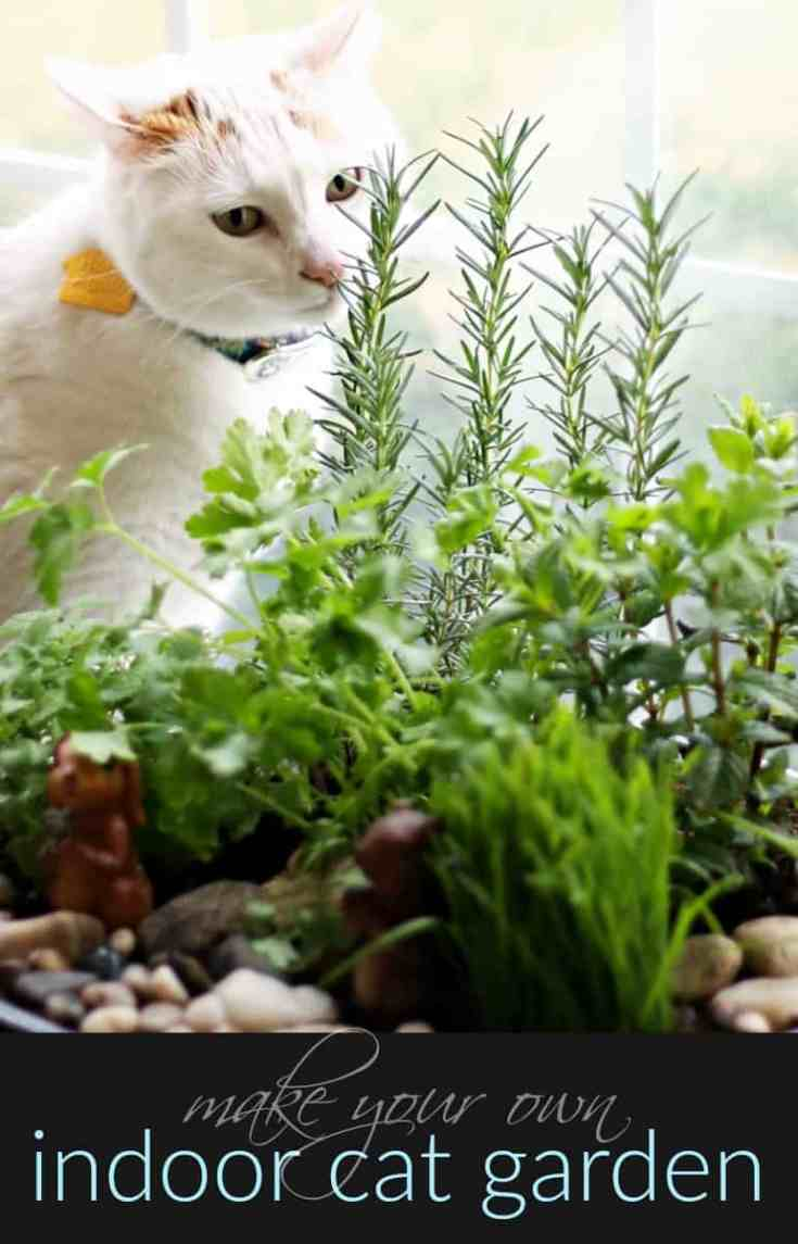 Diy indoor cat garden tutorial the anti june cleaver for Indoor gardening with cats