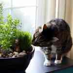 How to Make Your Own DIY Indoor Cat Garden